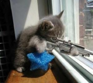 sniper_cat-12474