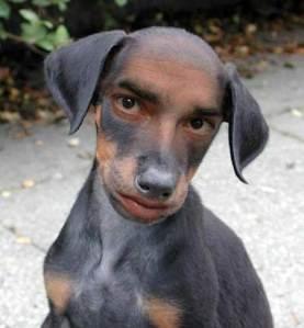 human-looking-dog